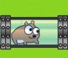 Hamster Yarışı