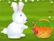 Yaramaz Tavşan Bakımı